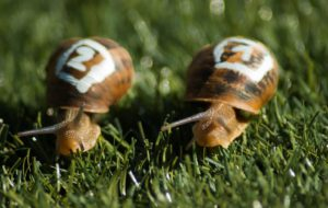 Freelancing - snails 1753611 1280