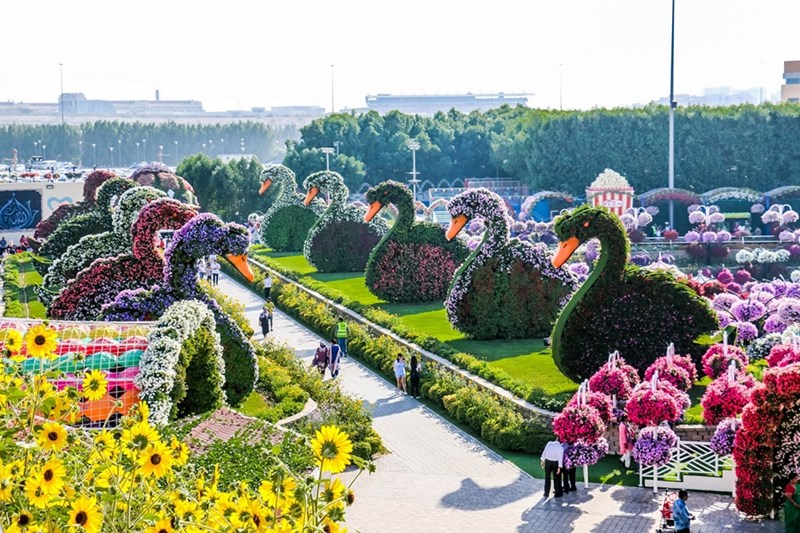 Freelancing - Dubai Miracle Garden photo