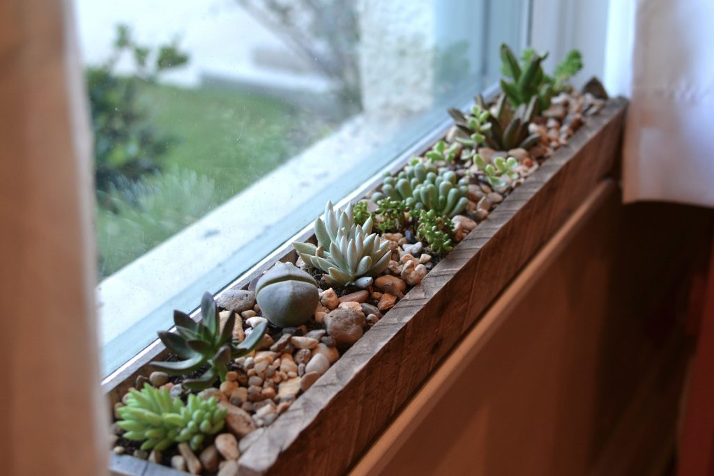 Freelancing - Indoor Flower Box Little Paths
